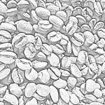 Bean Design